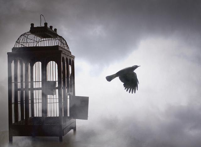 Free bird – Vishal Bheeroo