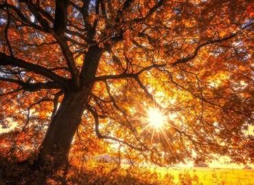 Moters viduramžis – gražus gyvenimo ruduo