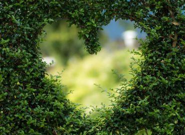 Kas širdies simpatija?..